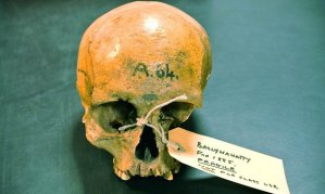Ancient Irish skull with Balkan DNA